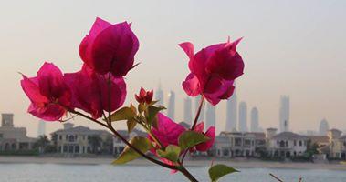 Dubai Palm Jumeira