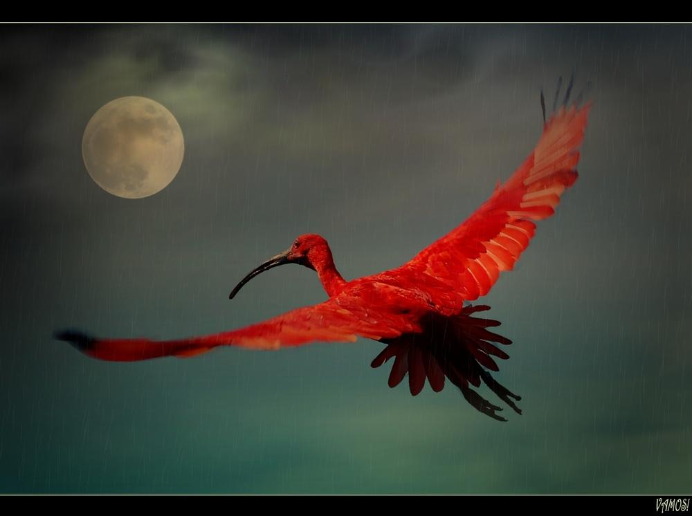 Dubledores Phoenix (reloaded)
