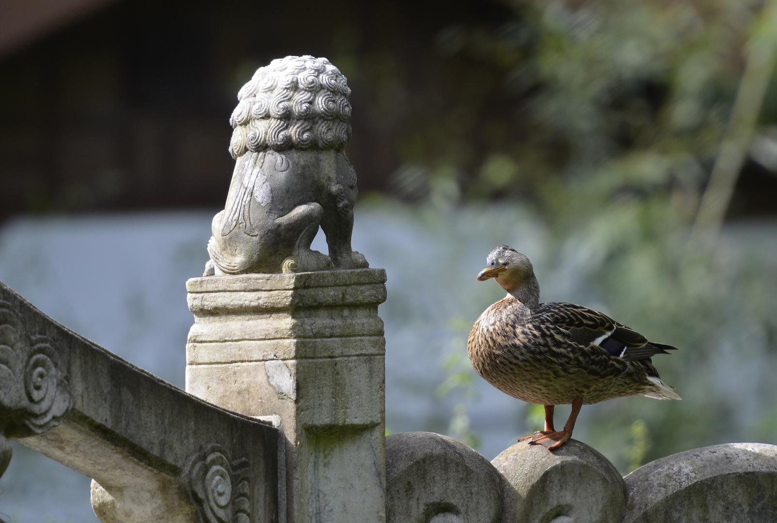 Duck meets
