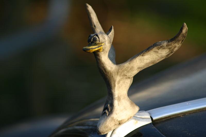 Duck of Ectasy