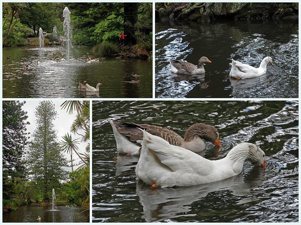 ..Duck Pond..
