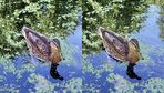 Duck (x view 3D)