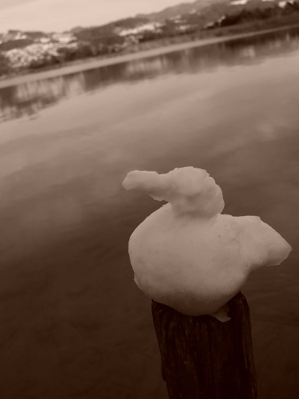 duckduck