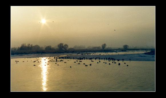 Ducks at river