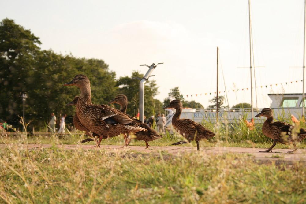 Ducktales flanieren auf Promenade