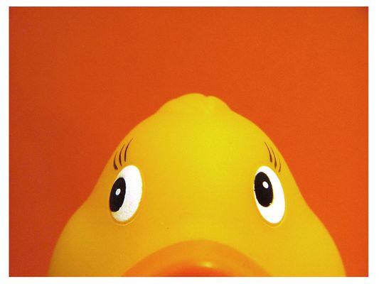 ....Duckzack