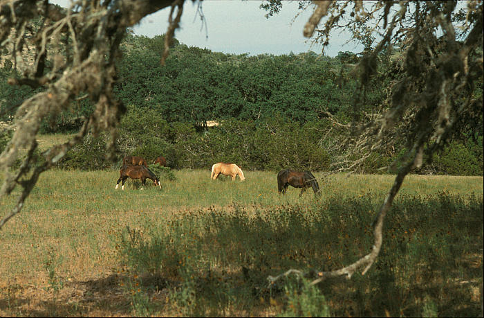 Dude Ranch 5