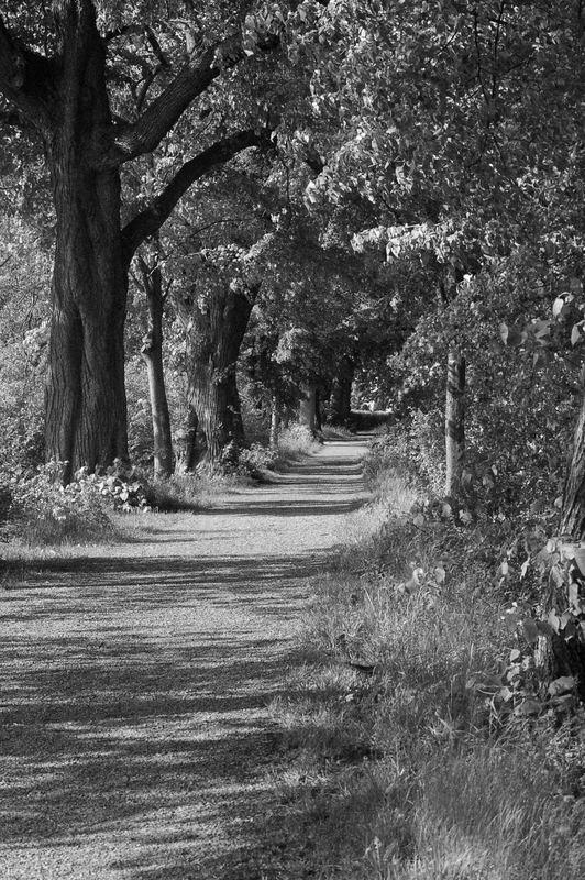 duderstadt: stadtwall