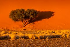 Düne Nr. 45 - Namibia