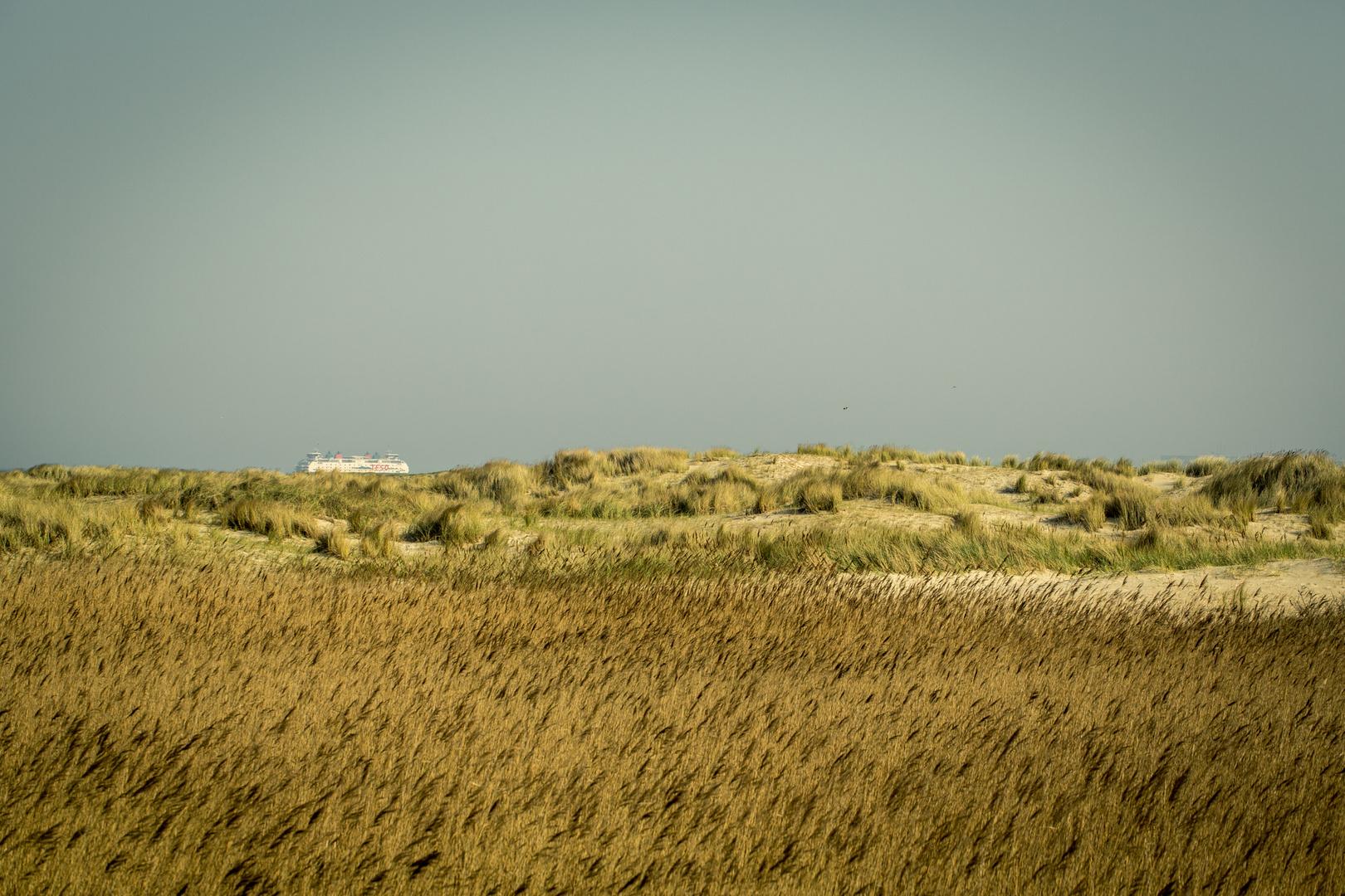 Dünen auf Texel