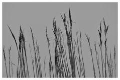 Dünen Grass im Morgennebel