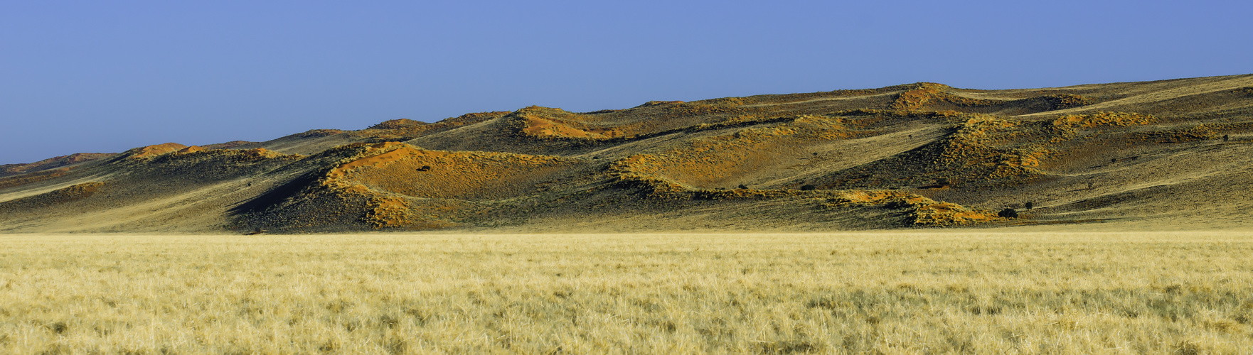 Dünen-Landschaft