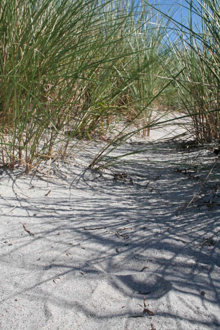 Düneneinschnitt