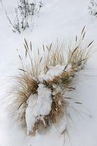 Duenengras im Schnee