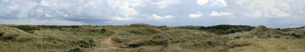 Dünenlandschaft auf Borkum
