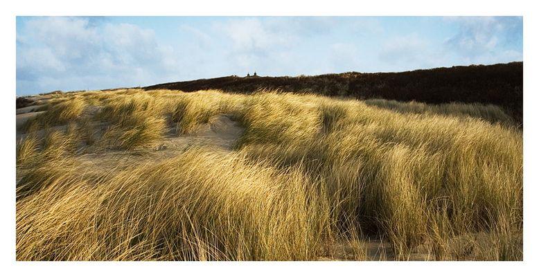Dünenlandschaft auf Langeoog