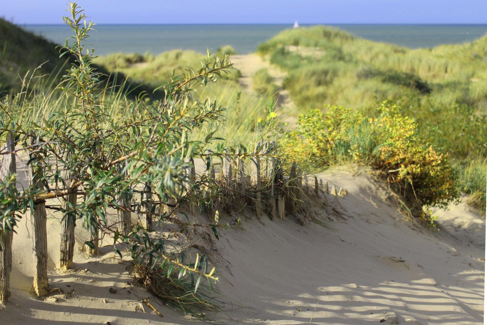 Dünenlandschaft bei Dunkerque