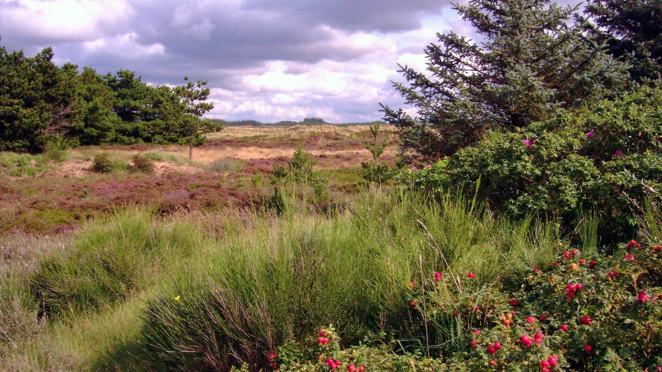 Dünenlandschaft Dänemark Hennestrand
