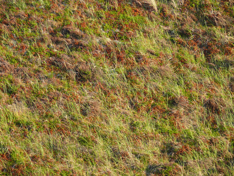 Dünenlandschaft im Detail