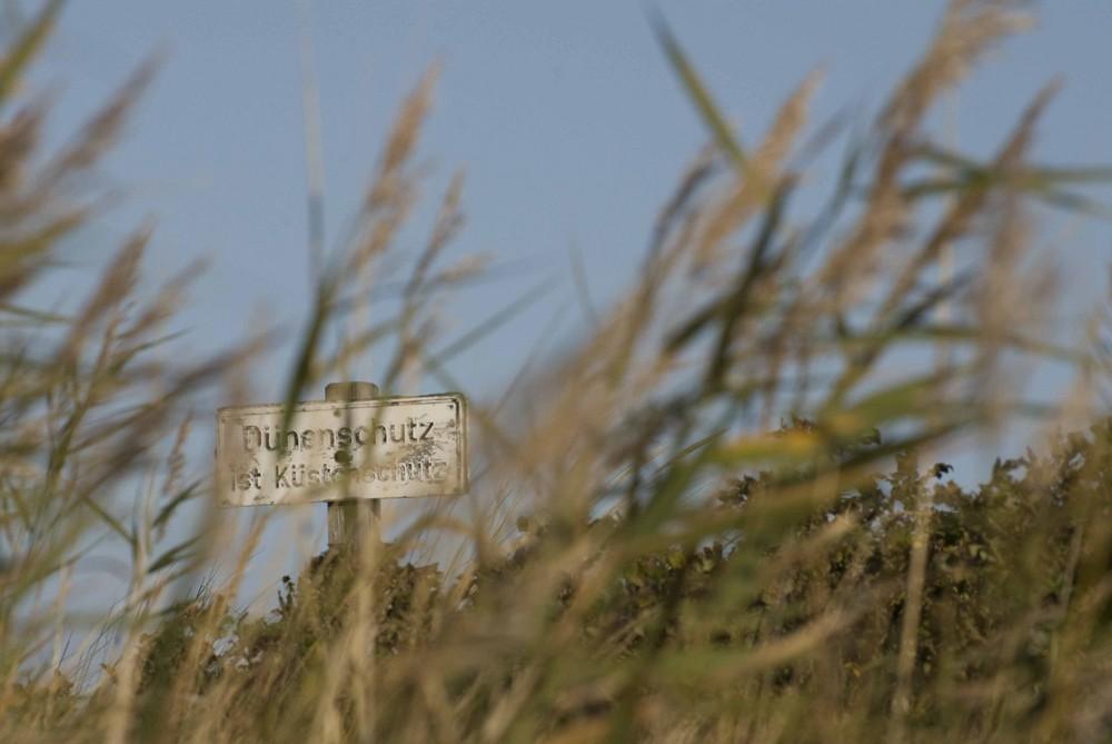 Dünenschutz ist Küstenschutz