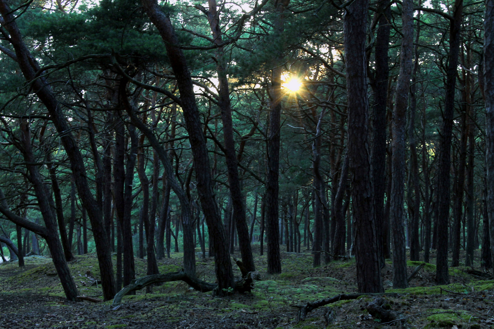 Dünenwald Teil 1