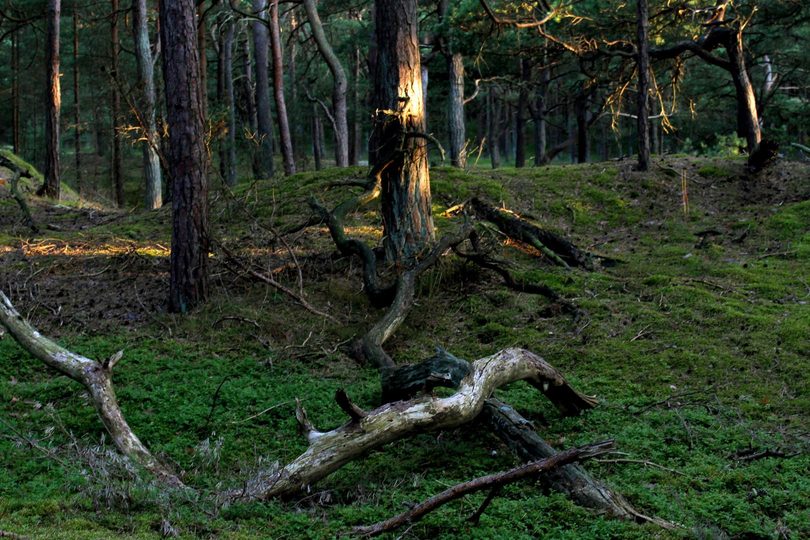 Dünenwald Teil 2