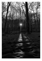 Duennwald Forest 21   Germany
