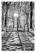 Duennwald Forest 24 | Germany