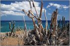 Dürre an der Karibikküste