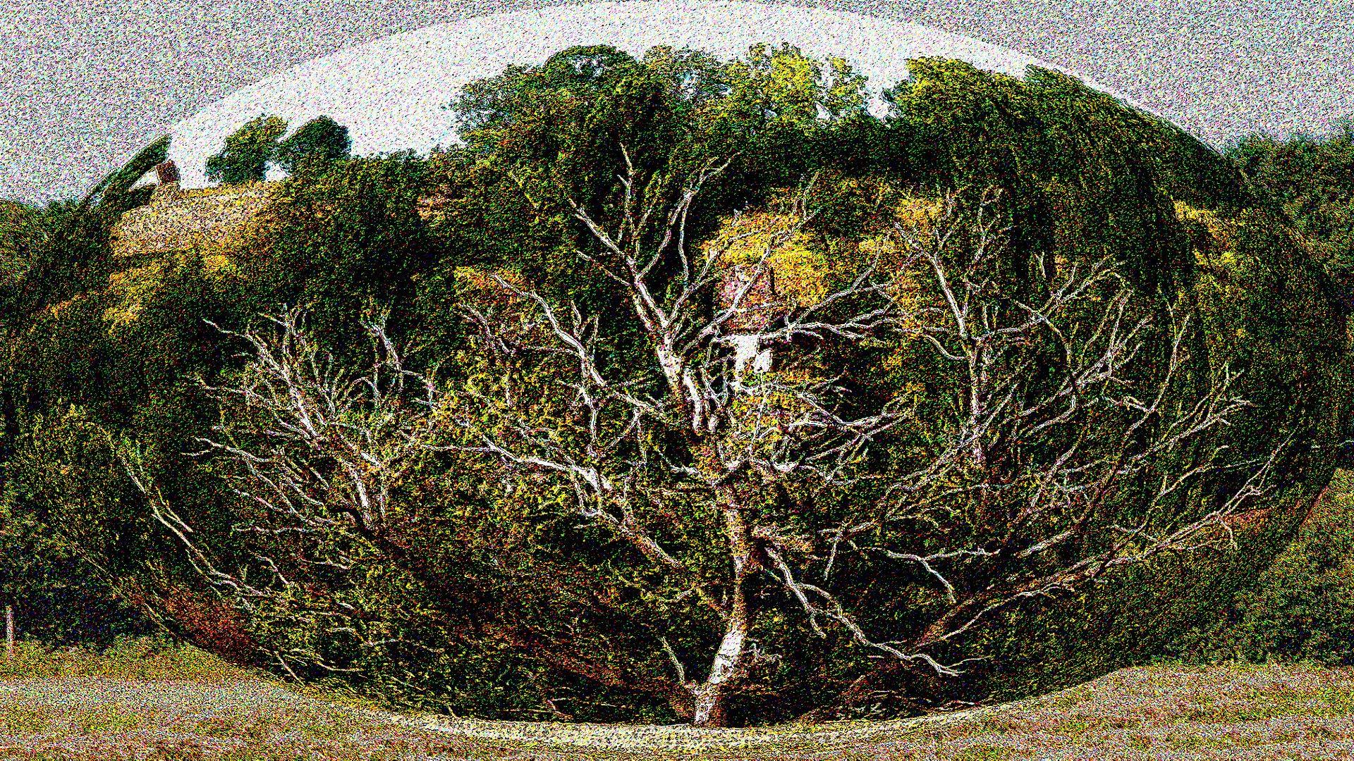 Dürre Baum