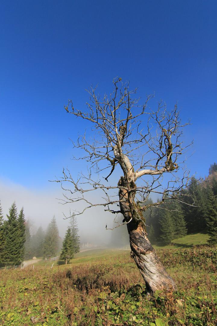 dürrer Baum vor Talnebel im Allgäu