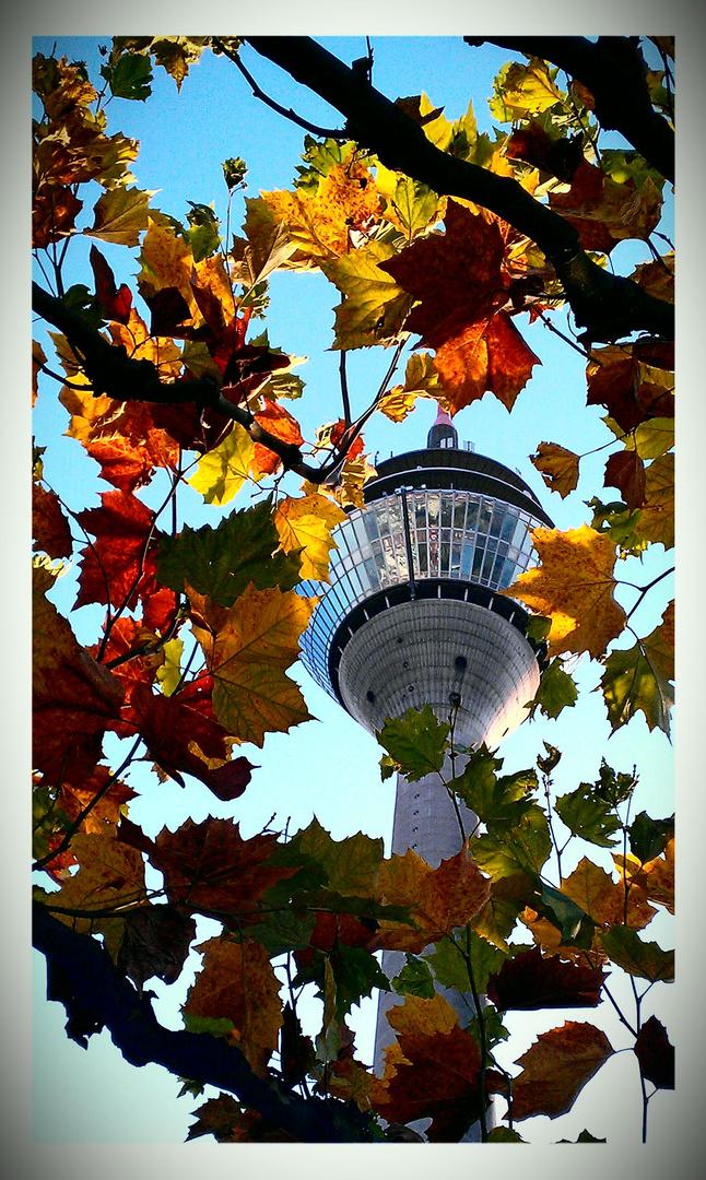 Düsseldorf in den schönsten Herbstfarben.