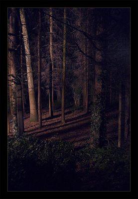 Düster Wald I (etwas größer)