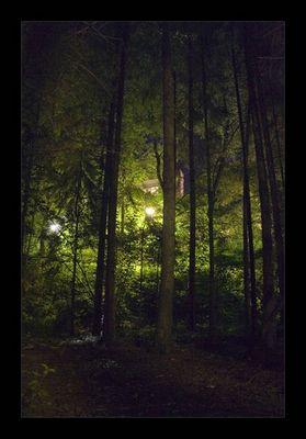 Düster Wald II