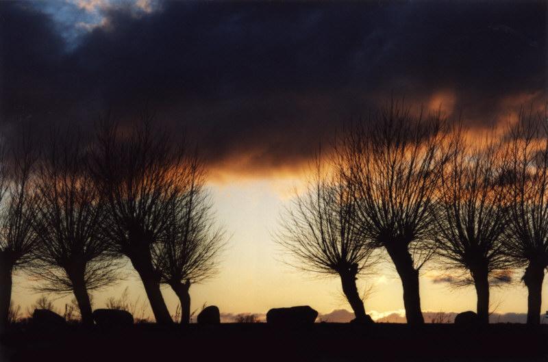 düstere Bäume