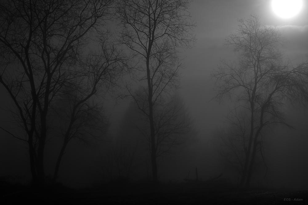 Düstere Wald
