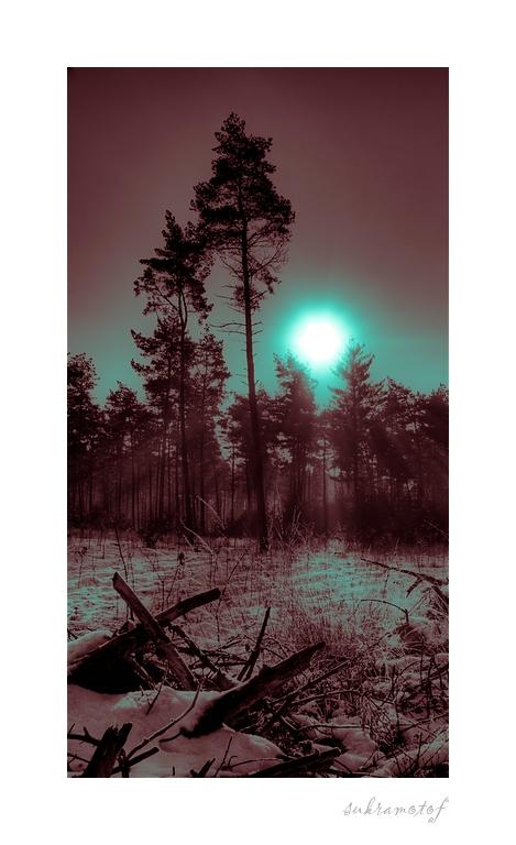 düstere Winterstimmung ....
