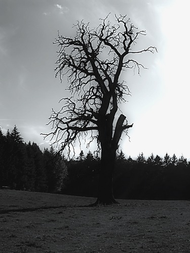 Düsterer Baum