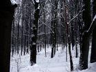 düsterer Winterwald