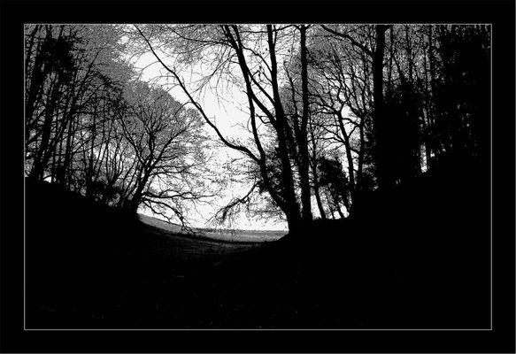 Düsterwald im Scherenschnitt