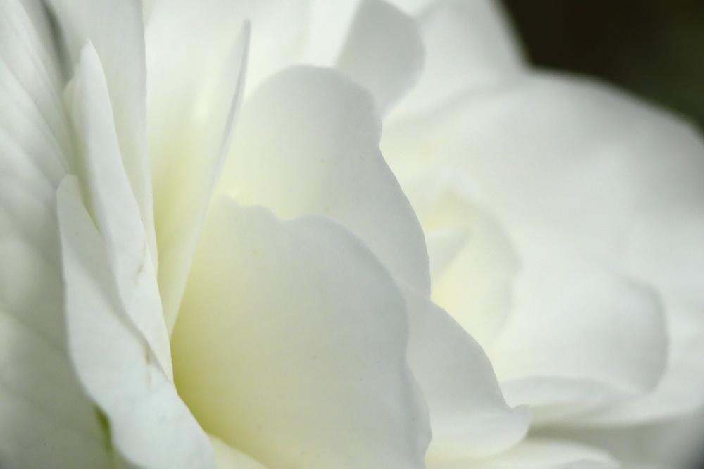 Duft in weiß