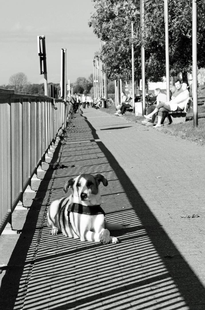 Duisburg ungeschminkt 7 - Relaxen am Leinpfad