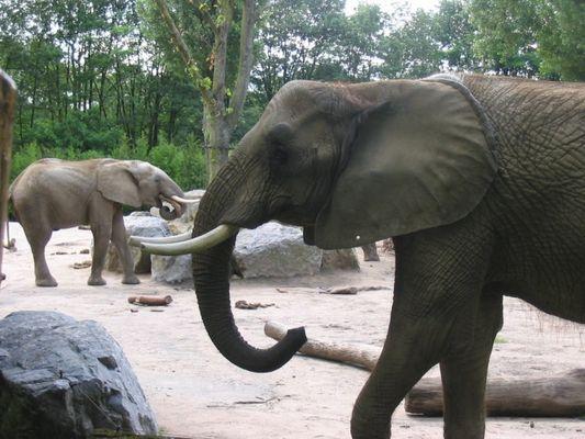 Duisburger Elefanten