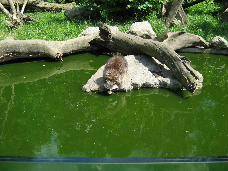Duisburger Zoo 3