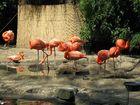 Duisburger Zoo 6
