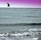 Duiveland am Meer