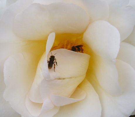 Dulce como miel