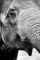Dumbo wird alt