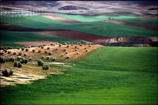 Dunas de olivares