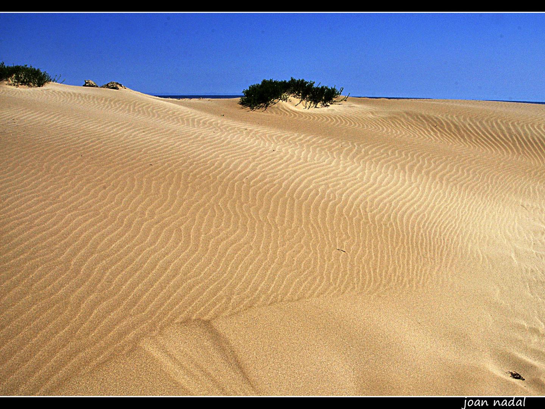 dunas en el delta de l´Ebre